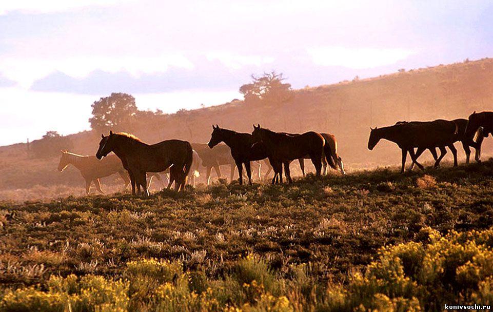 Конные прогулки на юге, на море, в Сочи, в горах Кавказа